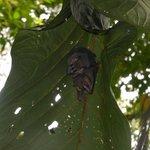 tent bats at rainmaker....
