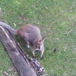 wild life very friendly