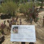 A view of the cactus garden