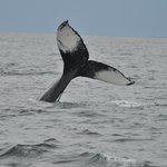 Each whale's tail fluke pattern is unique, like a finger print.