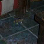 This little crab tried to check-in one night by the Lobby Bar.