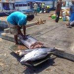 Yellow-fin tuna in the process of disembowelment