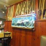 Pretty live fish tank and colorful corals as decor