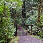 Bridge on the Leiffler Trail