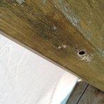 Wasps nest. The pool boy told us they weren't dangerous. Do we believe him?!?! NOOOOOO