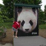 Lindos Pandas no Zoo