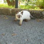 la simpaticissima gattina Clio