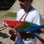 Different birds also colorful Parrots