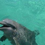 delfin de 2 años