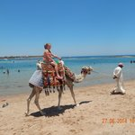 Camel ride along the main beach