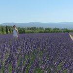 Provence lavender field!!