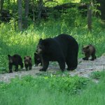 Mom with 5 Cubs
