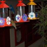 El patio se llena de colibries que viene a estos bebederos