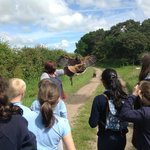 Harris Hawk ready for action