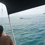 aquella mancha en el mar ... Un Delfin !!!!!! al fin jjaja !!!