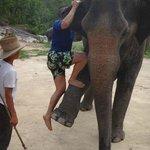 Excursion elephant