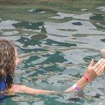 Con un dulce delfin!