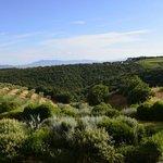 Vista general del paisaje