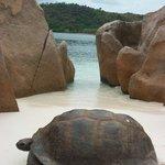meravigliosa tartaruga in spiaggia