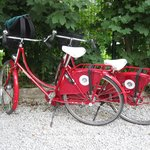 Cute bikes avalible for your use