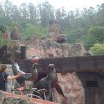Espectáculo con leones marinos