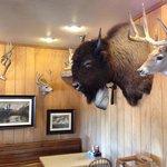 Buffalo, deer and bears.