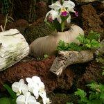 orchideeentuin