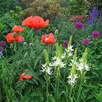 Poppies and flowers of all sorts