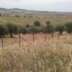 Photo of Agriturismo Buratta