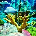 Large aquarium exhibit by front door