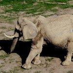 Blick auf die Elefantenanlage