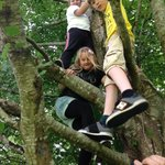 Great climbing trees