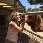 camel hugs