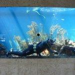 Tolle Aquarien: Taucher bei der Reinigung