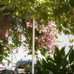 Cool Breeze Floral