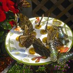 Our Butterfly Feeding Station