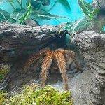 big honkin' spider