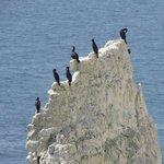 Cormorants on one of the rocks