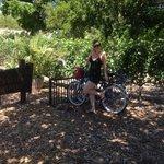 Free bike :)