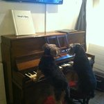 Oscar and Lily - Hotel entertainment!!