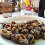 Snails for dinner