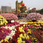 Flower exhibition in the park.