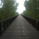 the bridge around mangrove