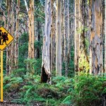 Boranup Forest - Marc Russo Photography