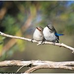 Wrens Hamelin Bay - Marc Russo Photography