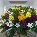 Dagelijkse bloemenpracht