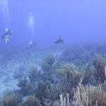 Reef Shark & Divers