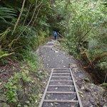 Trail at McLean Falls