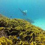 Coral formation diving