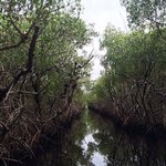 Light at the end of the mangrove tunnel